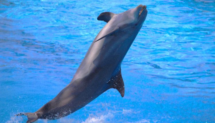 Misteriozna smrt 80 delfina, ekolozi zbunjeni