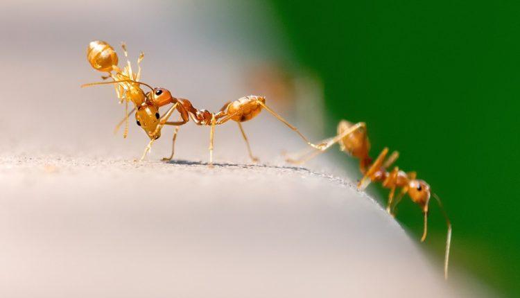 Miks 2 sastojka SMRT je za mrave i komarce