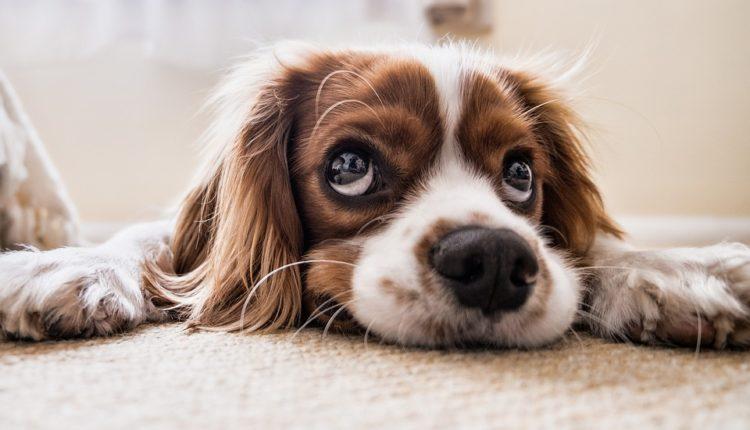 Koje je vama omiljeno: 10 najpopularnijih imena za pse u 2019.