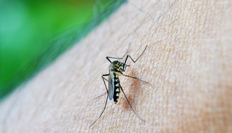 Enigma rešena: zašto komarci neke ljude vole više od drugih?