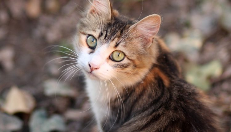 """""""Skripaljeva mačka se priprema za izvršenje zadatka"""""""