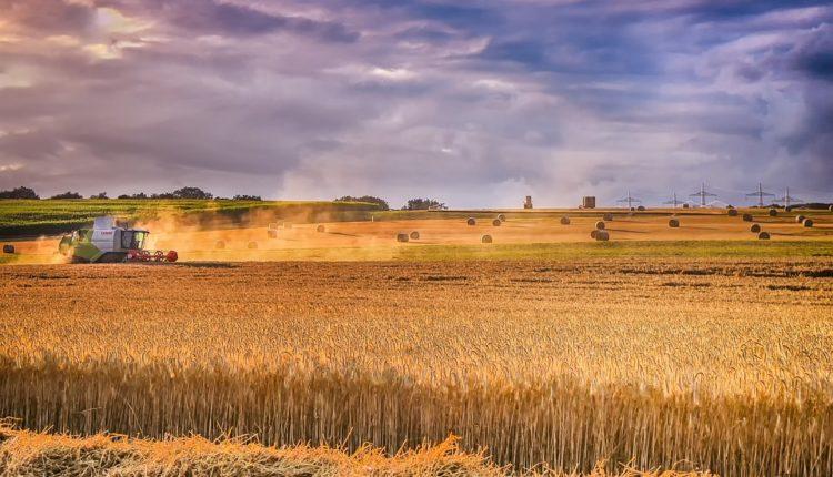 Sad je i ruska pšenica pretnja Americi