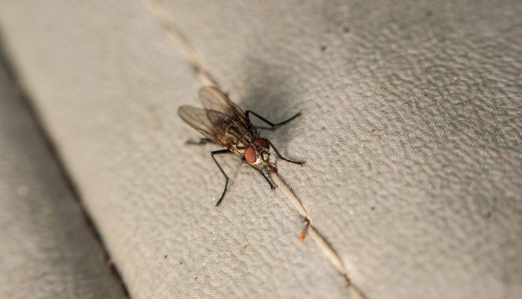 Apokalipsa insekata: Sve manje ih se lepi na šoferšajbnu, ali to nije dobra, već upozoravajuća vest