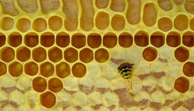 Kada vas pčela ubode: moguća burna reakcija – prva pomoć