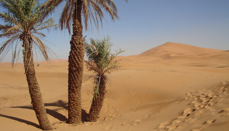 Pravi heroj: Pas istrčao 160 km preko Sahare