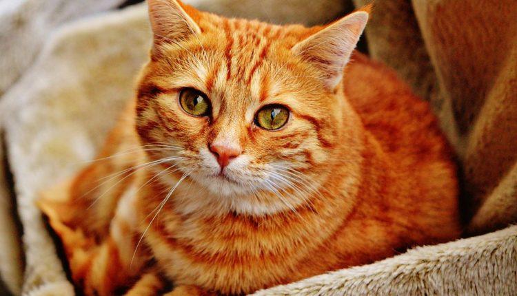Mačka je čuvar vašeg zdravlja, neke bolesti leči, neke čak i oseti