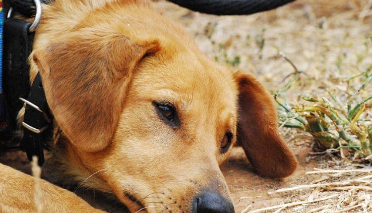 Ovih 11 stvari vašem voljenom psu mogu skratiti život