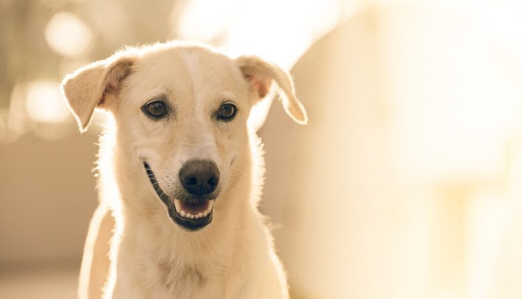 10 zanimljivosti o psima koje niste znali