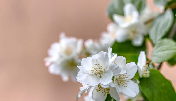 Unesite ovu biljku u kuću i osetićete POZITIVNE promene