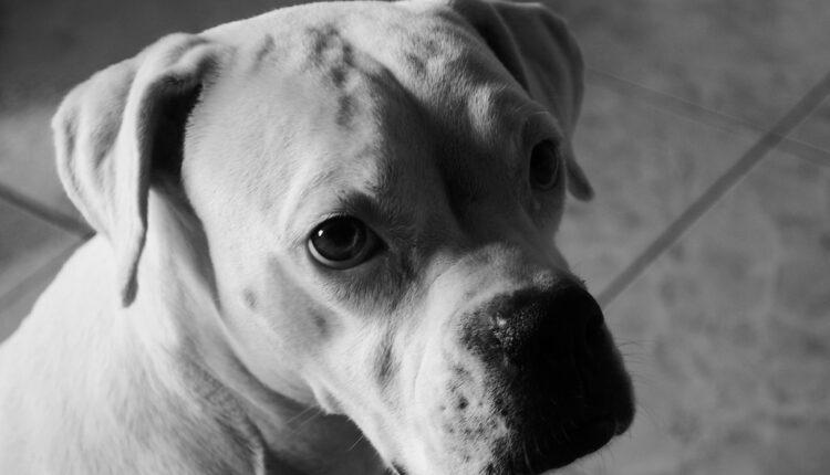 Majka ostavila devojčicu sa psom, kad se vratila dočekao je ŠOKANTAN prizor (foto)