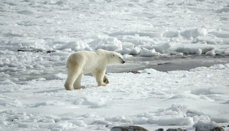 Borba protiv klimatskih promena – planiraju da ponovo zalede Arktik!