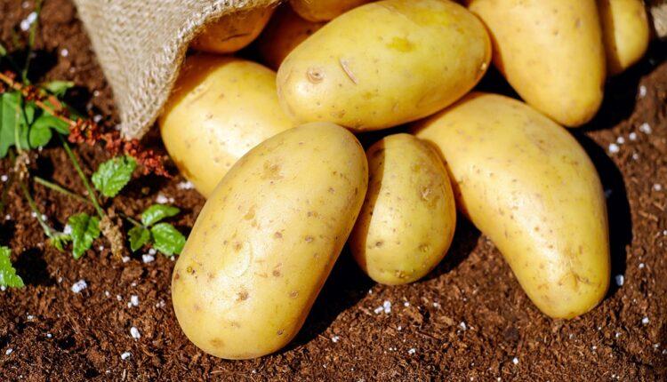 Krompir u Srbiji skuplji od banana, da nije ruskog cena bi otišla u nebo