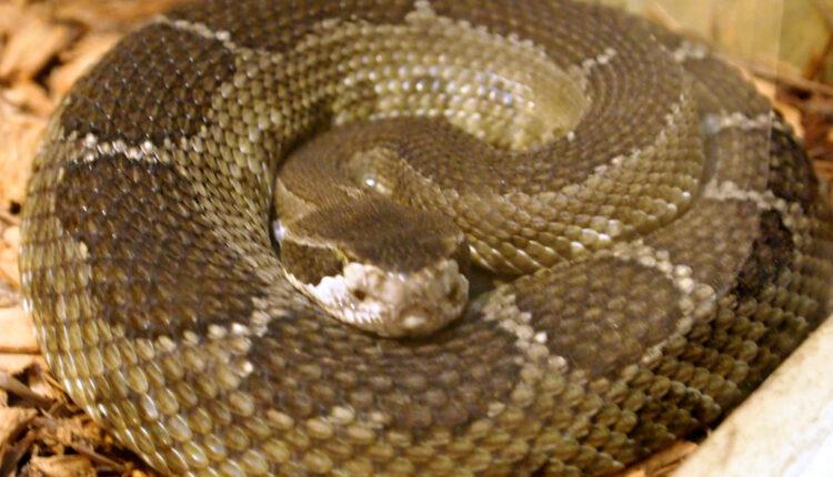 Zagrebom gamižu zmije duge i dva metra