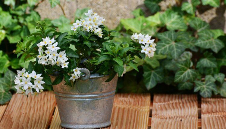 Ovu biljku obavezno držite u sobi – popravlja raspoloženje
