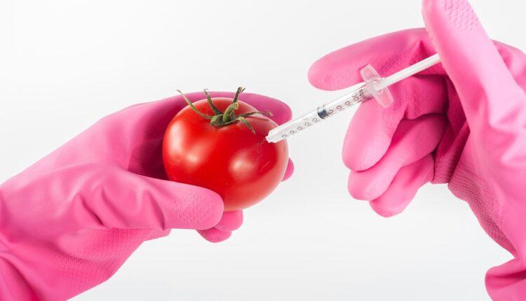 Nije GMO: Zašto paradajz koji kupujemo u prodavnicama nema ukus