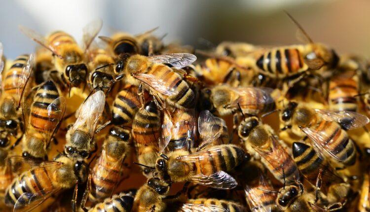 Zapanjujući razlog zbog kojeg je pomrlo pola milijarde pčela