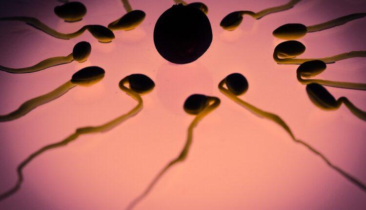 Otvorena prva banka reproduktivnih ćelija u Srbiji, evo ko može da bude donor