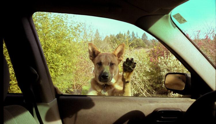 Zašto psi trče za automobilima i kako ih sprečiti u tome