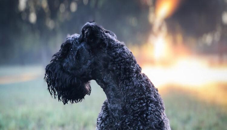Najskuplji psi na svetu