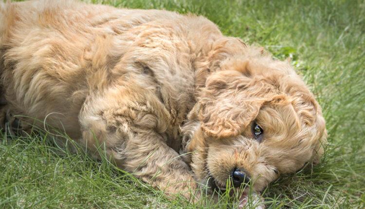 Zašto psi zakopavaju kosti?