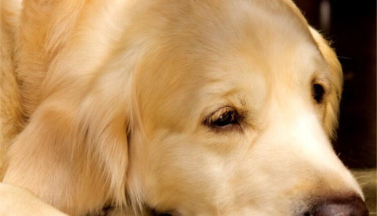 Obratite pažnju: Simptomi raka kod pasa