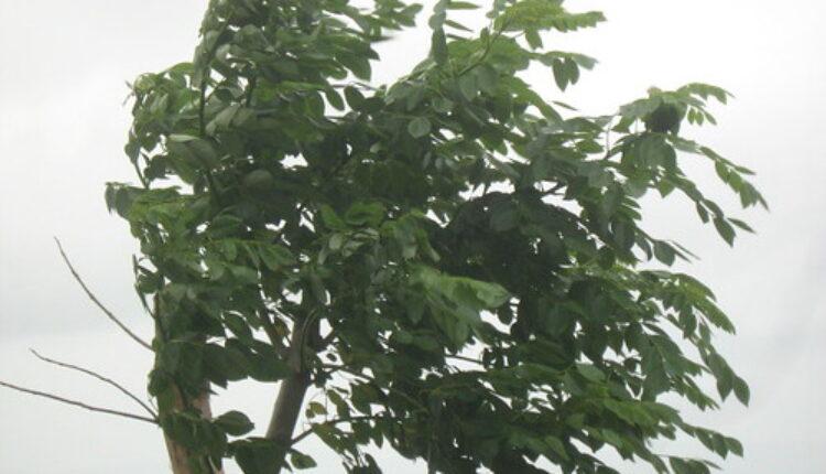 Upozorenje zbog olujnog vetra: Duvaće do 24m/s, u ovom delu Srbije biće najgore