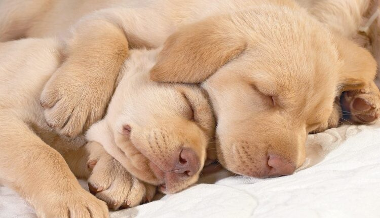 Znate li o čemu sanjaju psi? Evo odgovora…