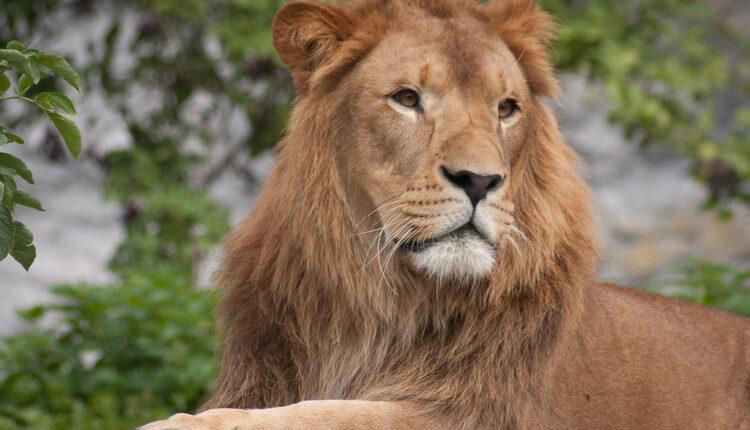 Ni manje ni više: Pokušao da prošvercuje lava iz Albanije
