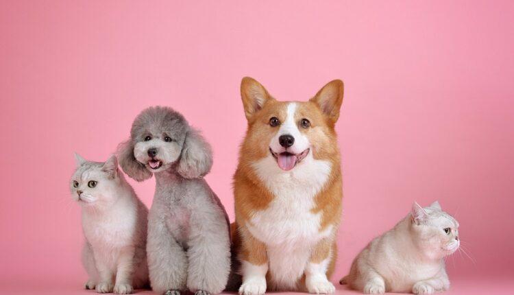Postoji pet osnovnih karaktera pasa, pogledajte kom pripada vaš