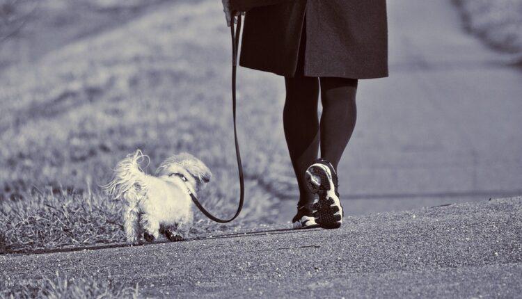 Vlasnici pasa dobijaju još jedan termin za šetanje svojih ljubimaca