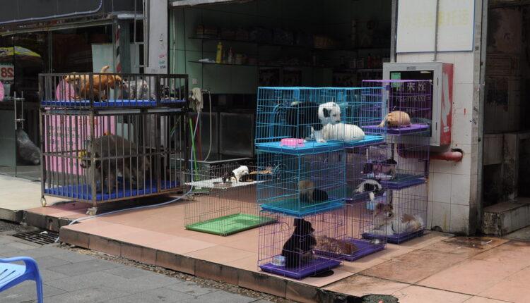 Najnovija odluka: Zabranjeno je jesti pse i mačke