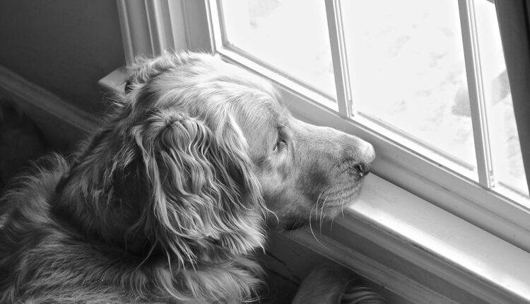 Koliko dugo pas može da ostane sam u kući?