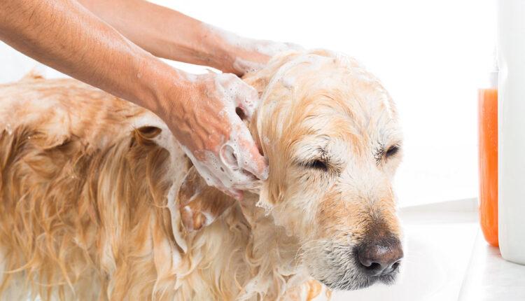 Evo zašto vaš pas odbija da ga kupate!