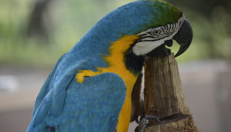 Jurio papagaja, popeo se na banderu – ubila ga struja