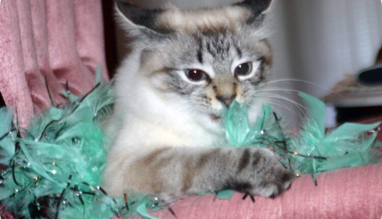 Slušajte mačku kako prede, desiće se nešto fantastično