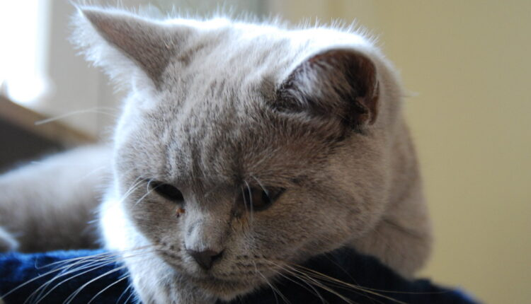 Mnogi rade ovu UŽASNU stvar mačkama a zakonom je dozvoljena