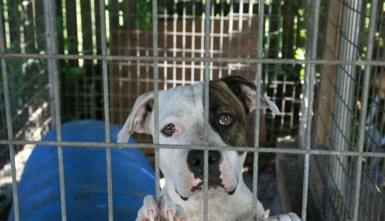 Stop ubijanju životinja: Ova država zabranila prodaju psećeg mesa