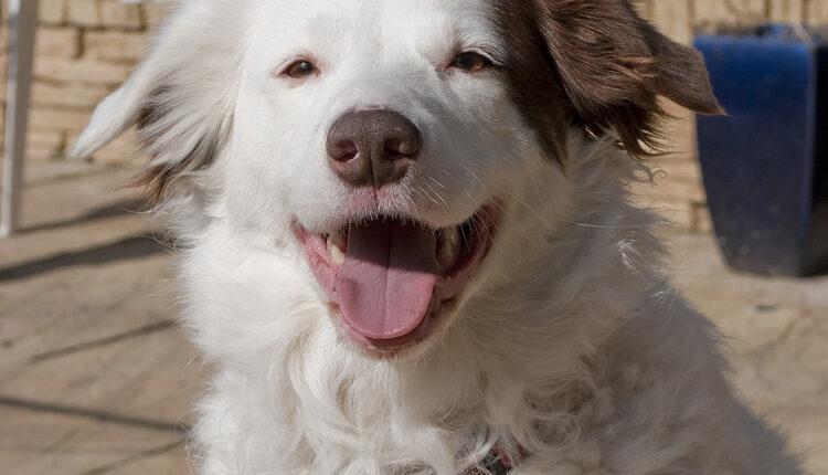Krzno otkriva koliko će pas živeti?