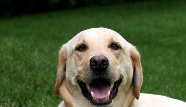 Pas prešao 80 kilometara da bi došao do kuće vlasnika!