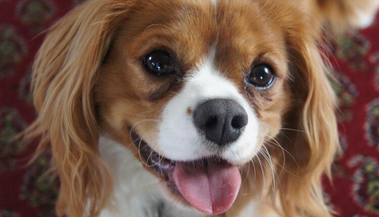 Otkrivamo mogu li psi da se zaljube