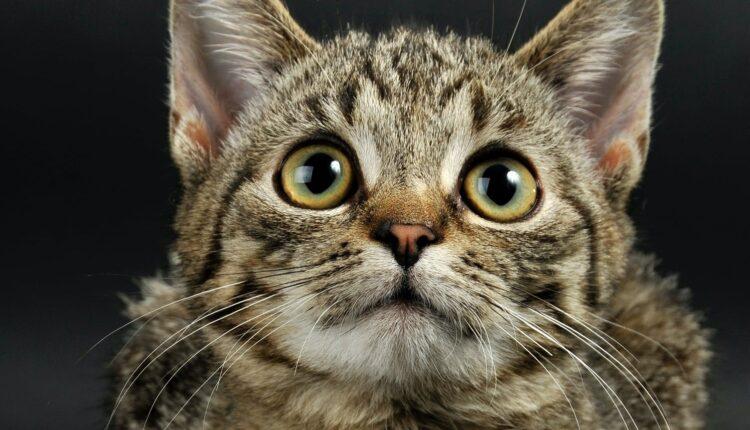 Izbačen iz stana sa 110 mačaka, traže pomoć za smeštaj – mačaka