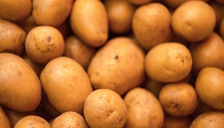 Pravilno čuvanje krompira: Jedino ćete ovako sprečiti da proklija