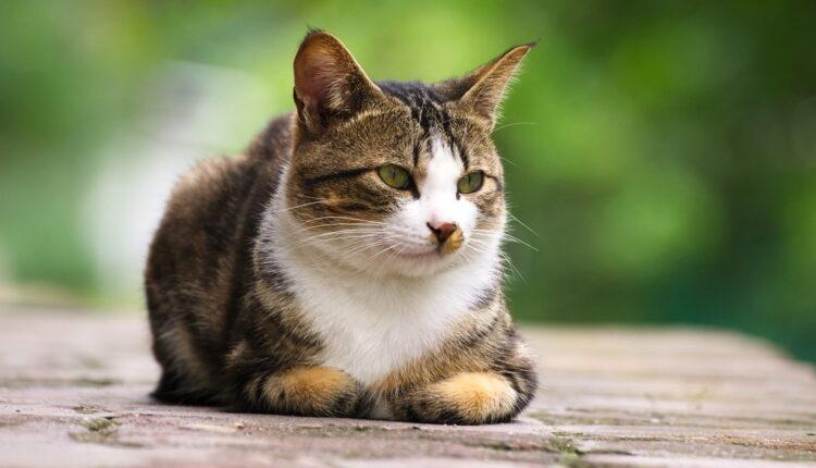 Mislite da znate sve o mačkama? Ove činjenice sigurno će vas iznenaditi