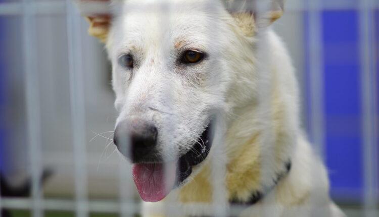 10 rasa pasa koje ljudi najčešće napuštaju