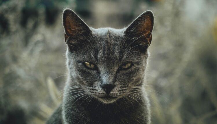Šest znakova po kojima ćete prepoznati da vas mačka potajno mrzi