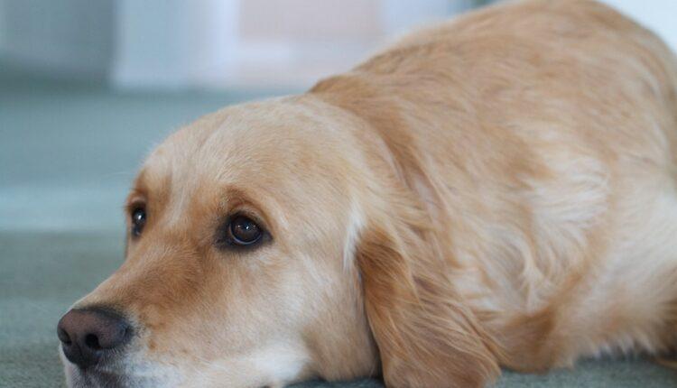Prestrašno: Sahranili živog psa