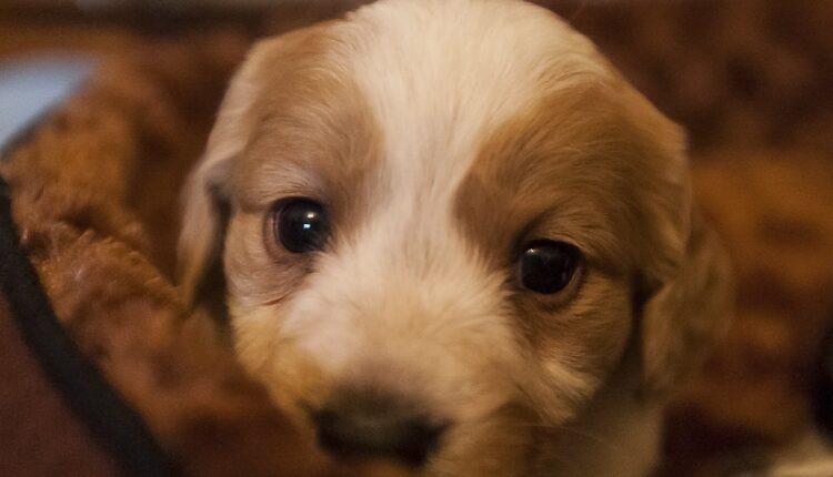 Ako vaš pas ovo radi – voli vas