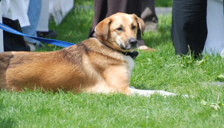 Zašto pas voli da se valja po travi?