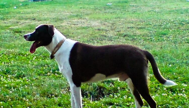 Pas prešao 60 km da bi našao vlasnika