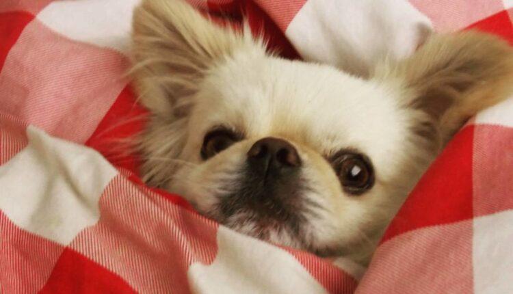 Čuje li vas vaš pas?